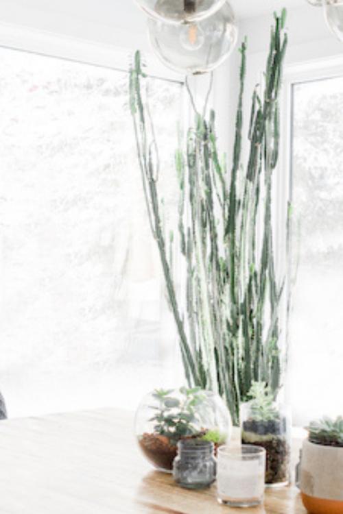 The Best Indoor Plants For Beginners – Expert Tips