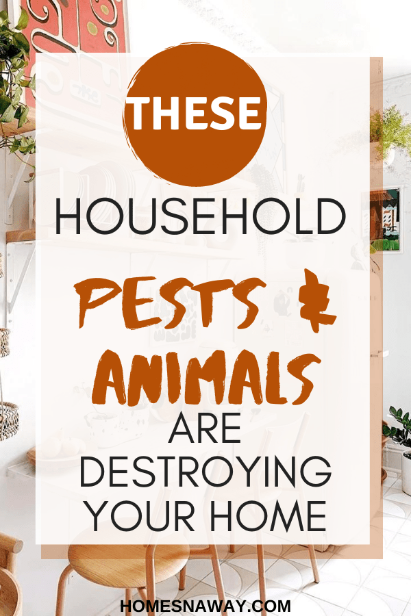 These Household Pests & Animals Are Really Damaging Your Home