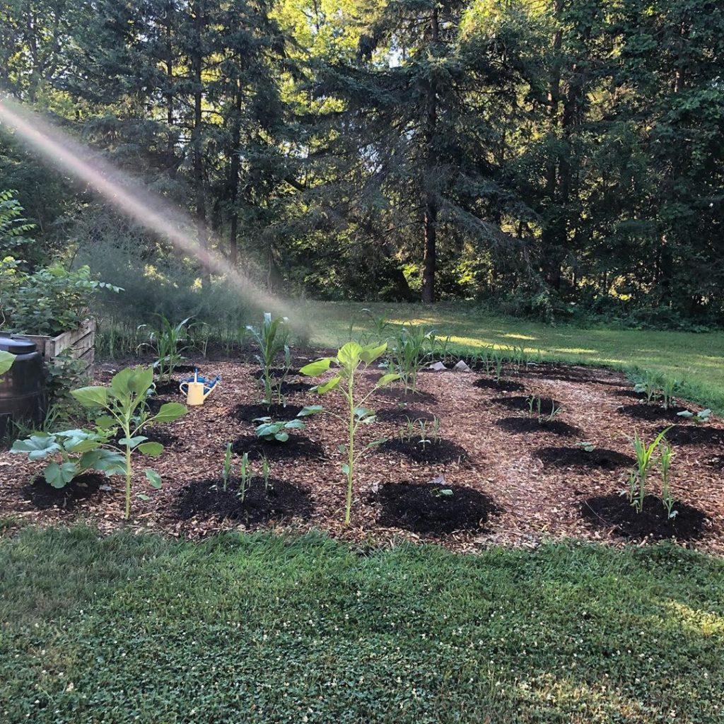 Should You Start A No-Till Garden?