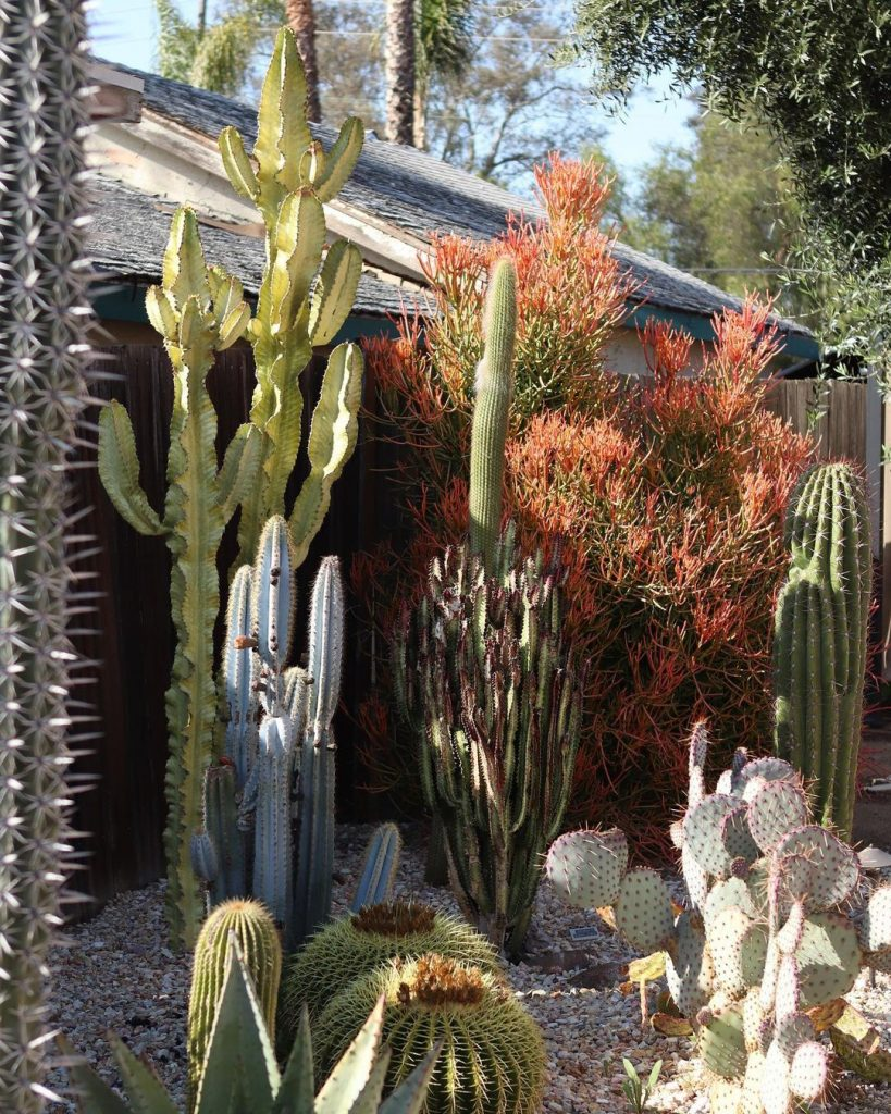 How Do You Start & Care For A Cactus Garden?