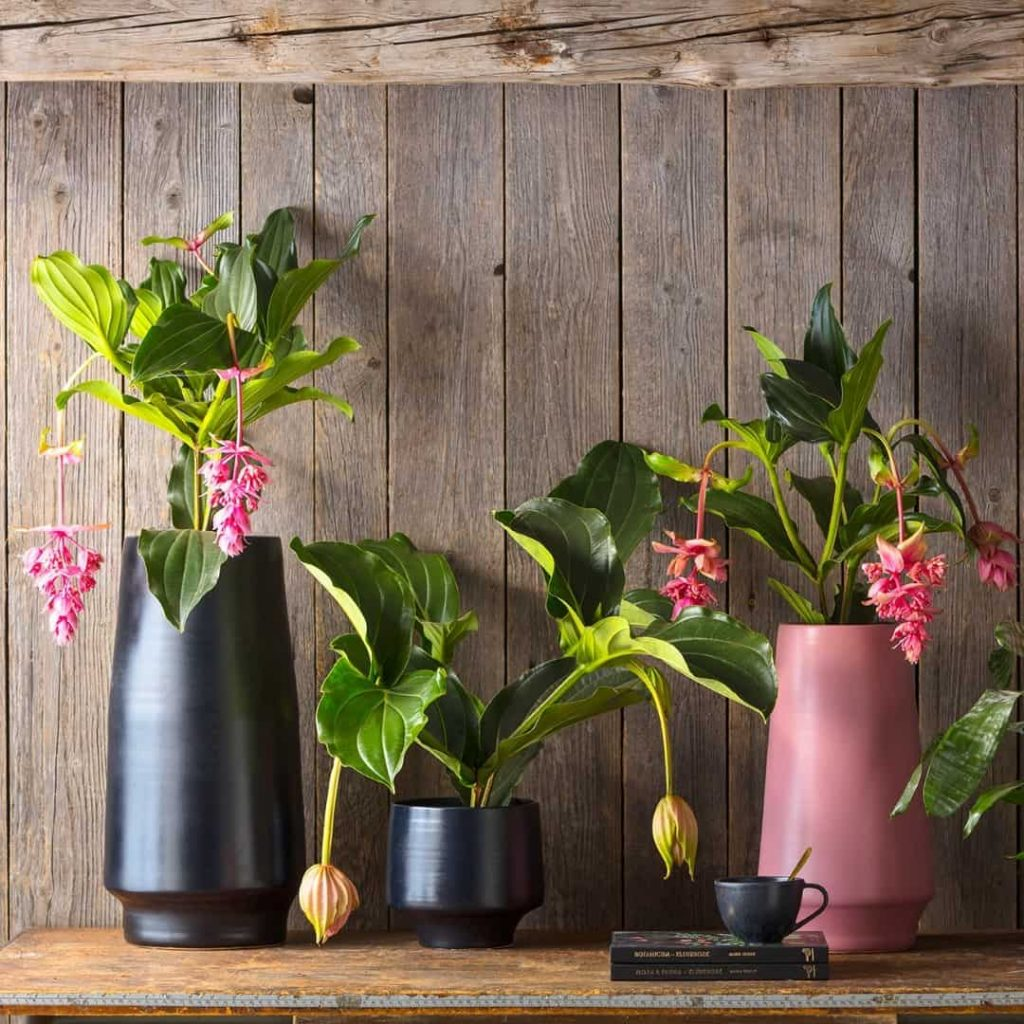 20 Houseplant Decor Ideas To Inject Life Into Your Home