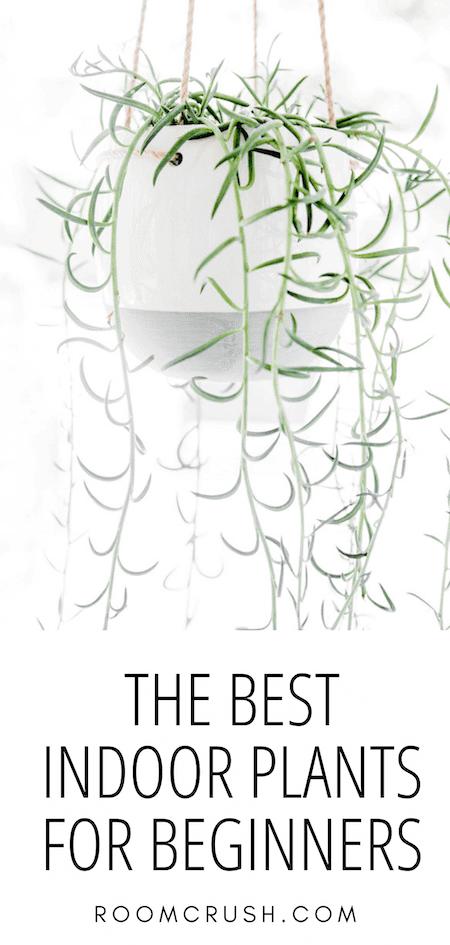 The Best Indoor Plants For Beginners